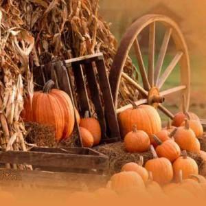 PumpkinsandCornstalks