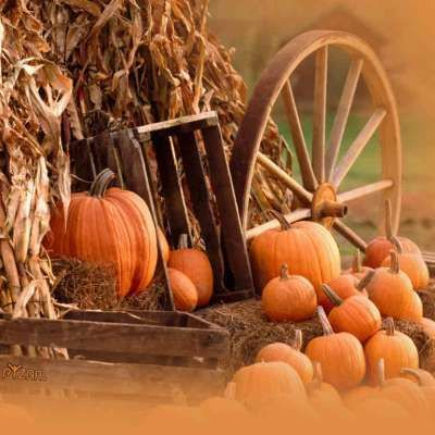 Arclight fall 2015 ag relations council ag relations - Pumpkin wallpaper fall ...